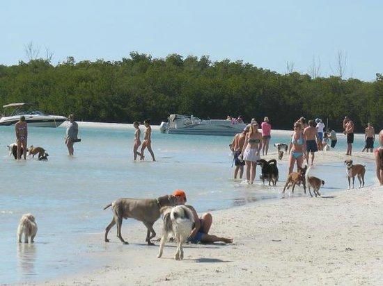 dog-beach.jpg