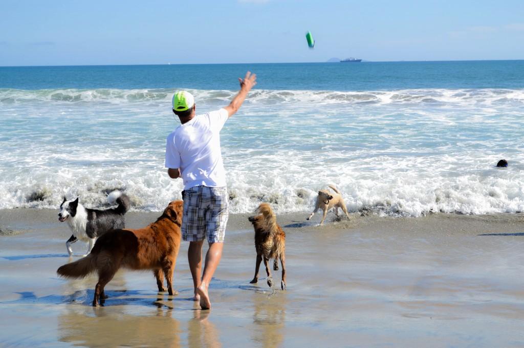 Dog-beach-186-1024x682.jpg