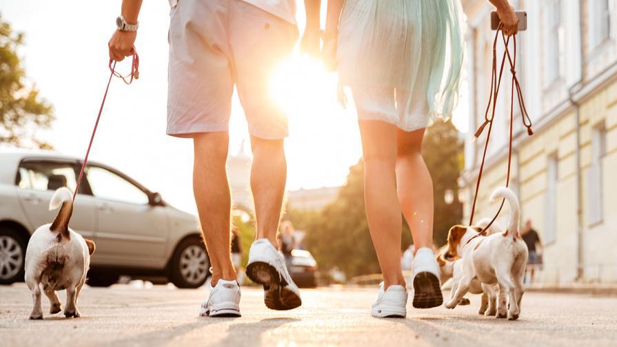 1280-dog-walking.jpg