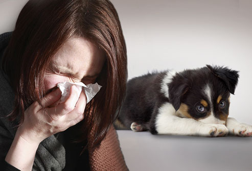 photolibrary_rm_photo_of_sneezing_woman_and_dog.jpg