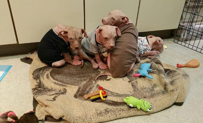 abandoned-puppies-lost-hair-mange-7.jpg