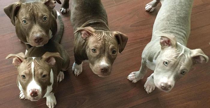 abandoned-puppies-lost-hair-mange-8.jpg