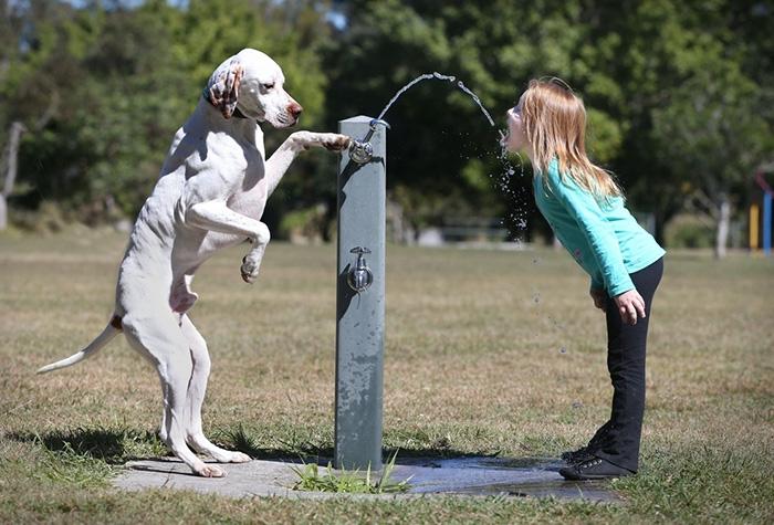 kids-with-pets-711__700.jpg