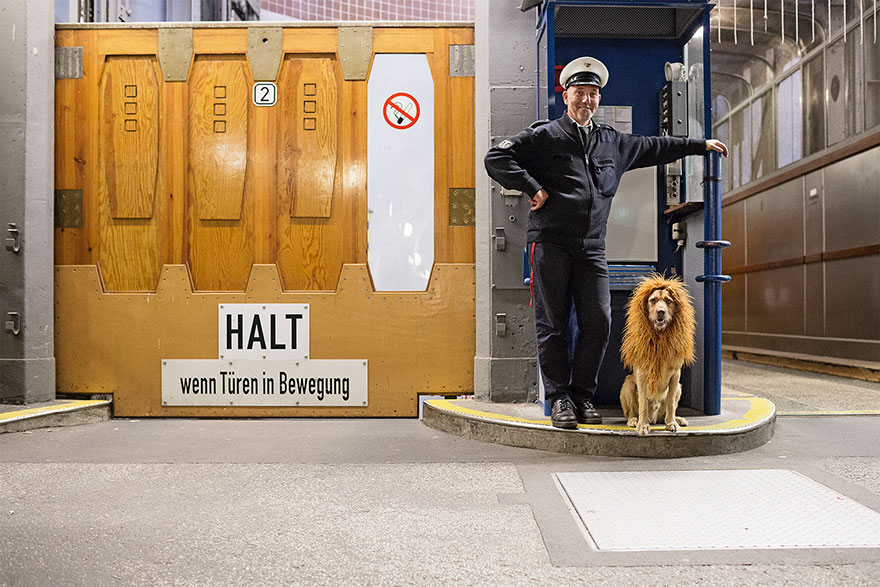 stray-dog-big-city-lion-grossstadtlowe-julia-marie-werner-8.jpg