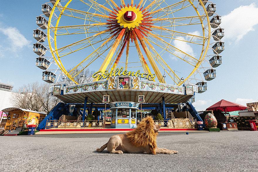 stray-dog-big-city-lion-grossstadtlowe-julia-marie-werner-9.jpg