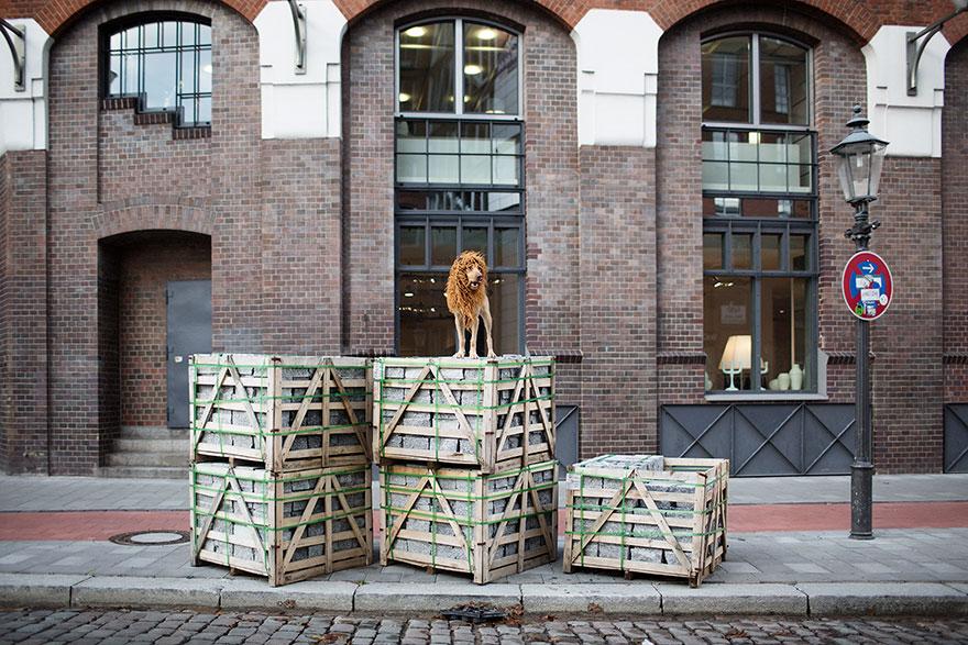 stray-dog-big-city-lion-grossstadtlowe-julia-marie-werner-5.jpg