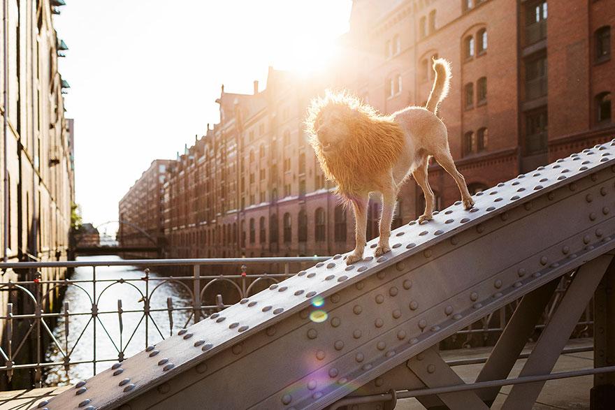 stray-dog-big-city-lion-grossstadtlowe-julia-marie-werner-12.jpg
