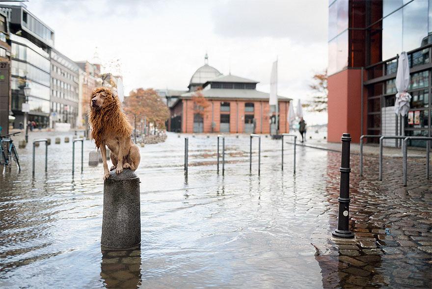 stray-dog-big-city-lion-grossstadtlowe-julia-marie-werner-16.jpg
