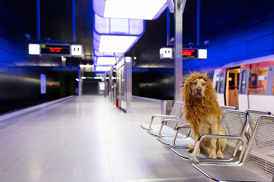stray-dog-big-city-lion-grossstadtlowe-julia-marie-werner-11.jpg