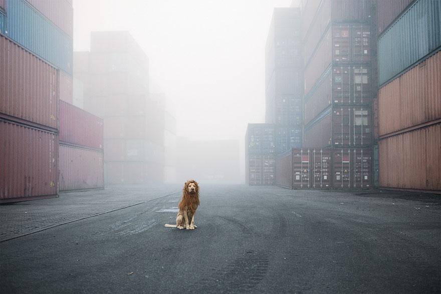 stray-dog-big-city-lion-grossstadtlowe-julia-marie-werner-1.jpg