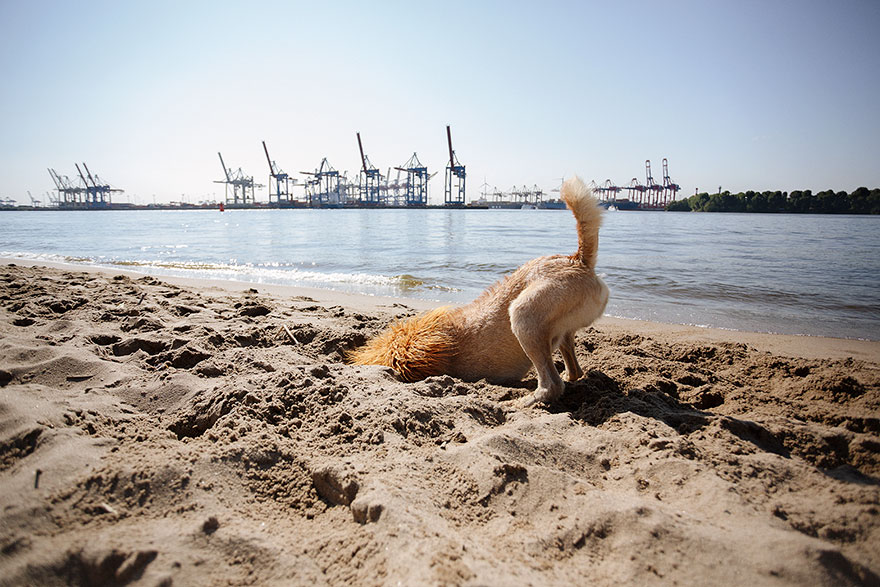 stray-dog-big-city-lion-grossstadtlowe-julia-marie-werner-6.jpg