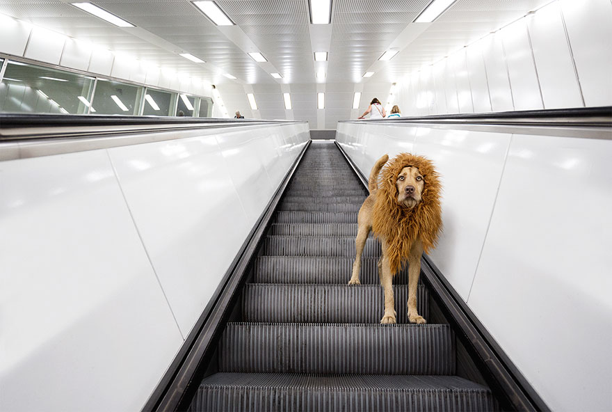 stray-dog-big-city-lion-grossstadtlowe-julia-marie-werner-2.jpg