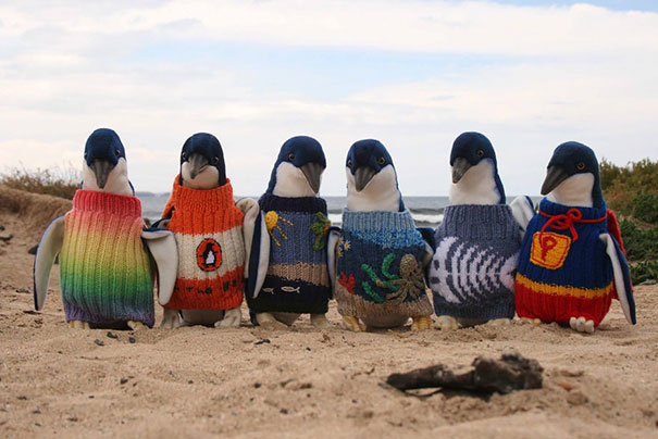 cute-animals-wearing-tiny-sweaters-68-5804bb84b1298__605.jpg
