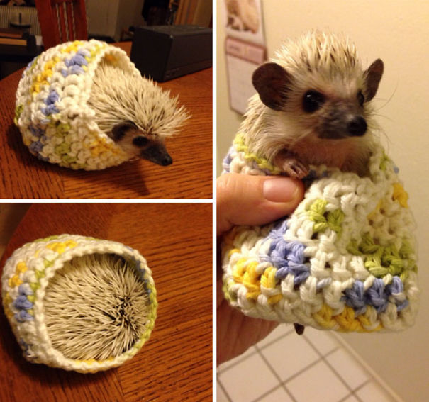cute-animals-wearing-tiny-sweaters-85-5804d7834c9c8__605.jpg