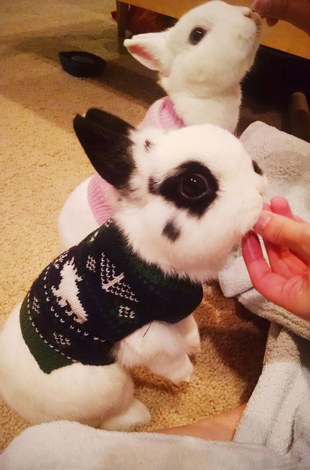 cute-animals-wearing-tiny-sweaters-79-5804cecfbbde8__605.jpg