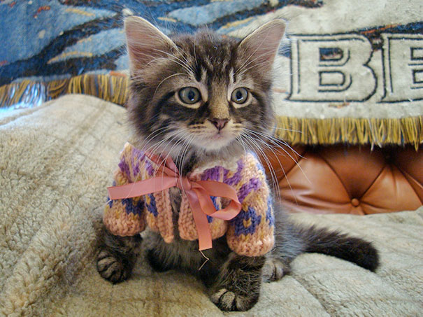 cute-animals-wearing-tiny-sweaters-1-57ff4f6925de7__605.jpg