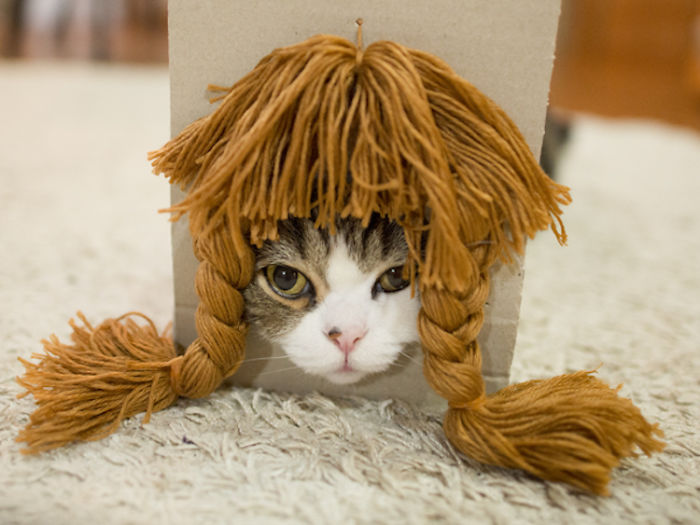 maru-cat-box-hairstyles-4-58e48de9c23eb__700.jpg