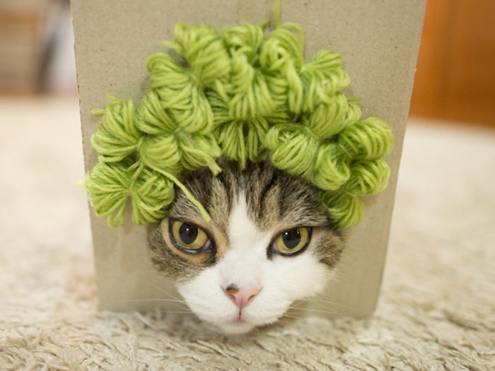 maru-cat-box-hairstyles-3-58e48de78120f__700.jpg