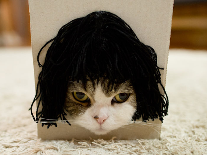 maru-cat-box-hairstyles-2-58e48de5887a6__700.jpg