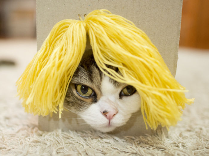 maru-cat-box-hairstyles-1-58e48de35ddcc__700.jpg