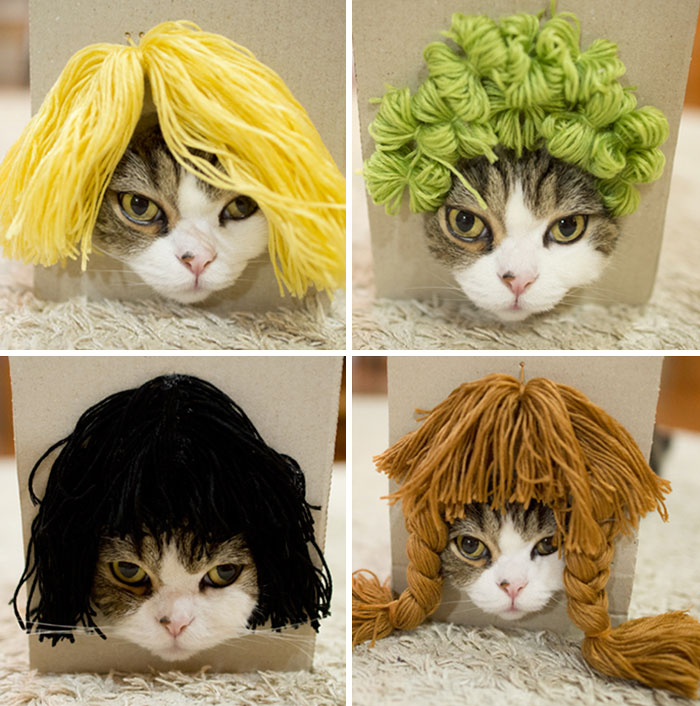 maru-cat-box-hairstyles-15.jpg